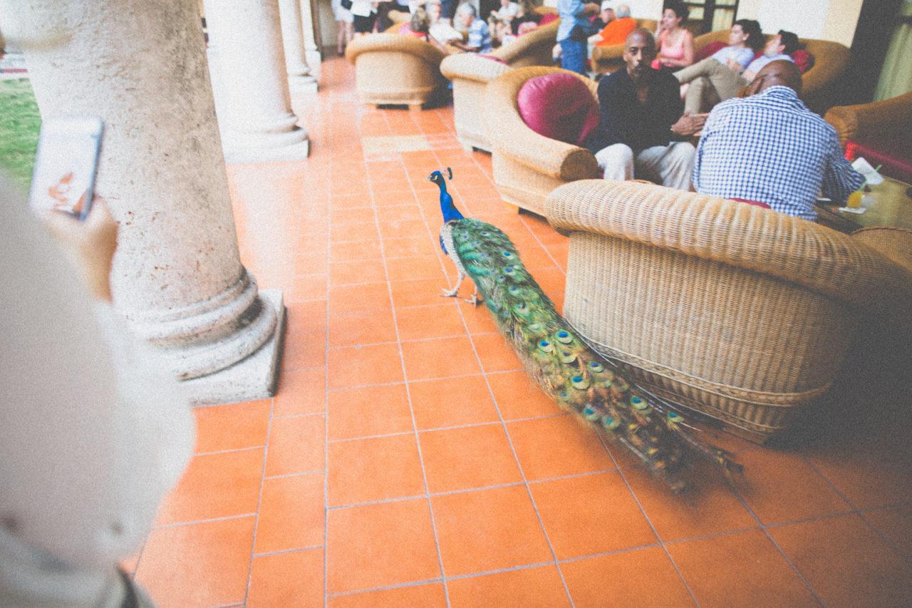 MrKate_Cuba_Summary_Blog (43 of 132)