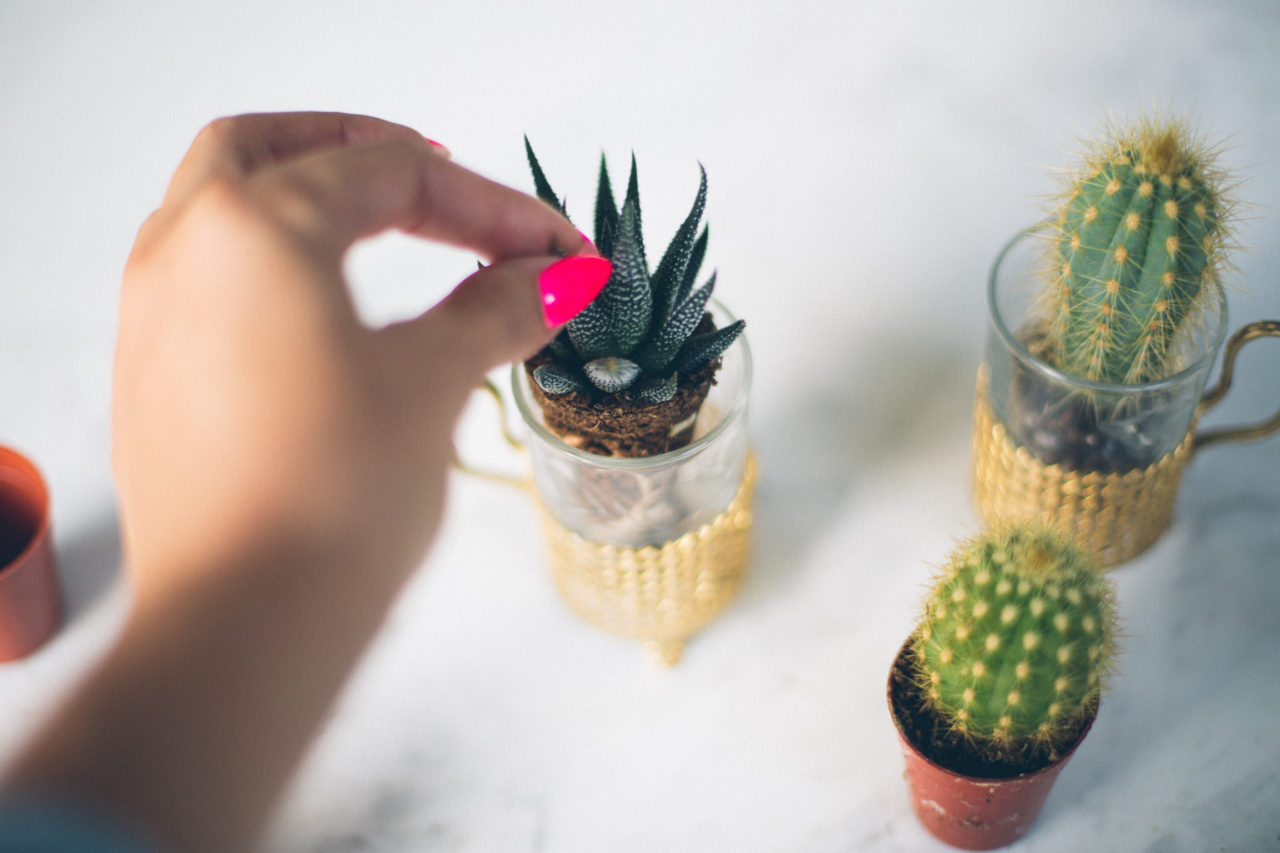 MrKate_Bouquet_of_The_Month_Cacti_Mini-14