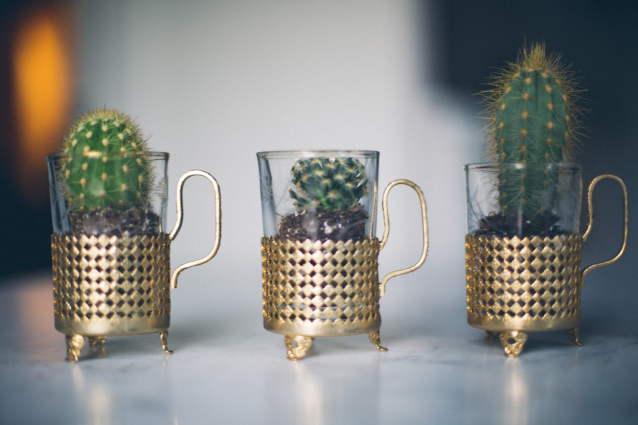 MrKate_Bouquet_of_The_Month_Cacti_Mini-32