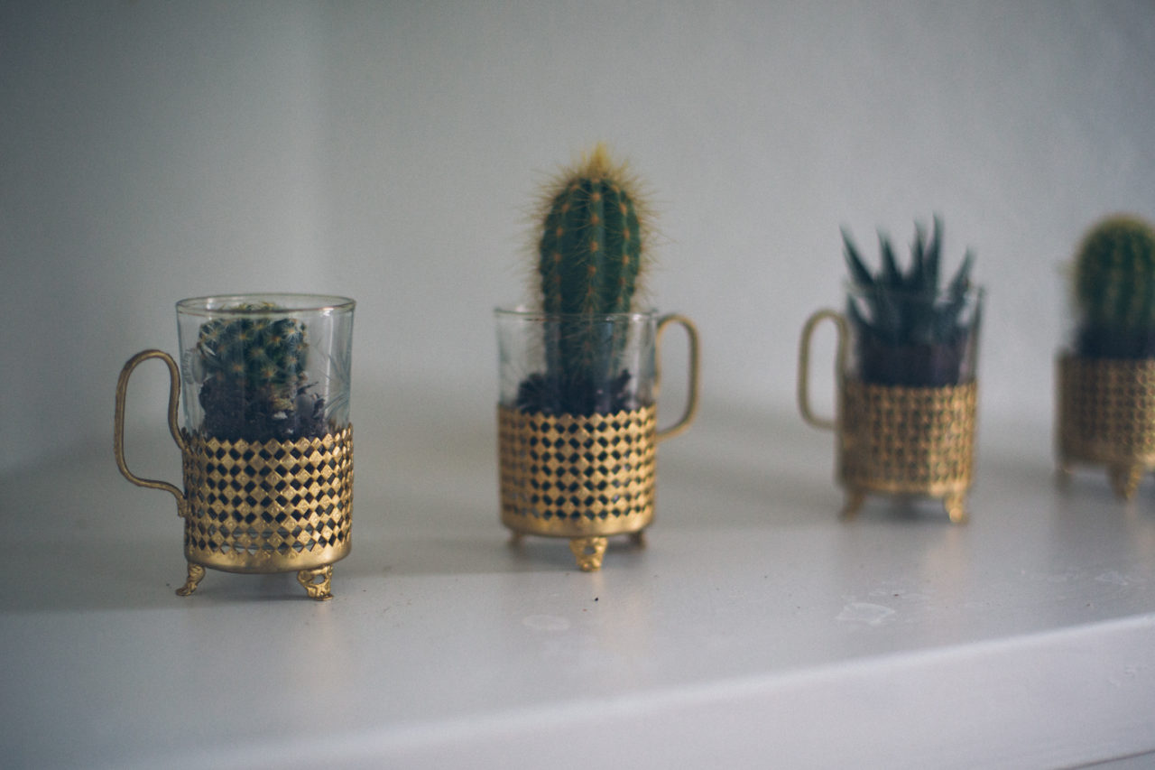MrKate_Bouquet_of_The_Month_Cacti_Mini-7674