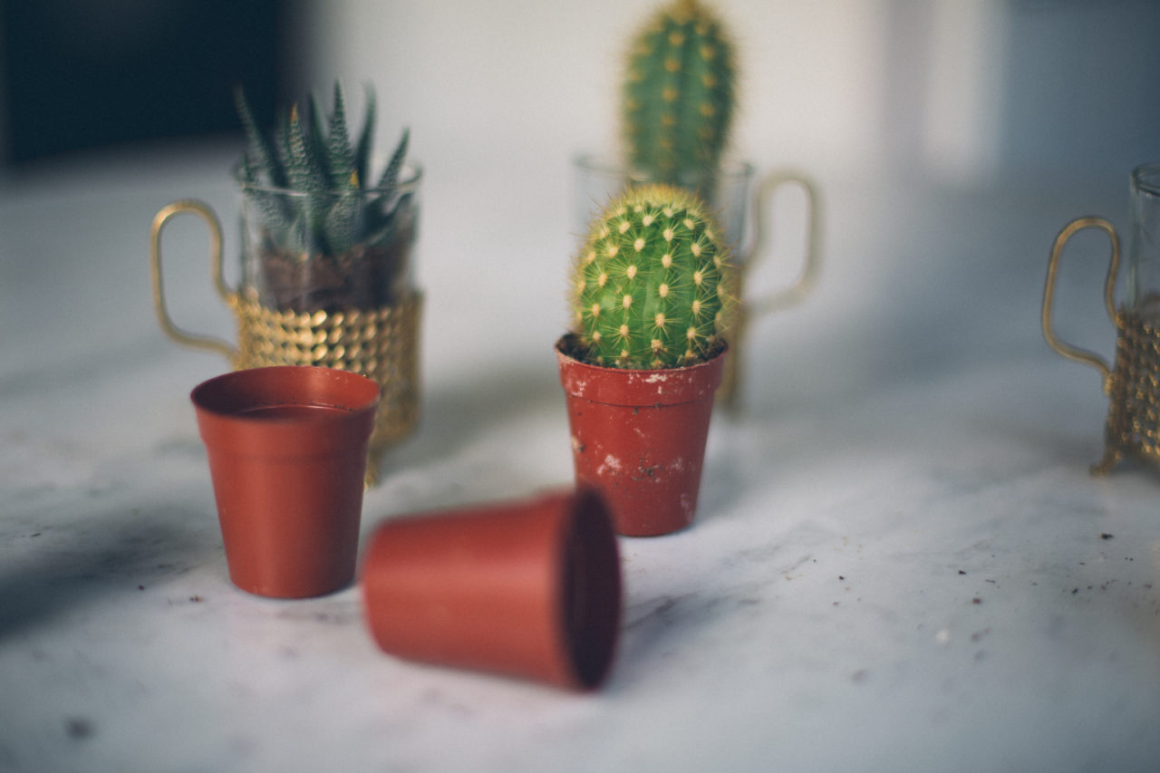 MrKate_Bouquet_of_The_Month_Cacti_Mini-17