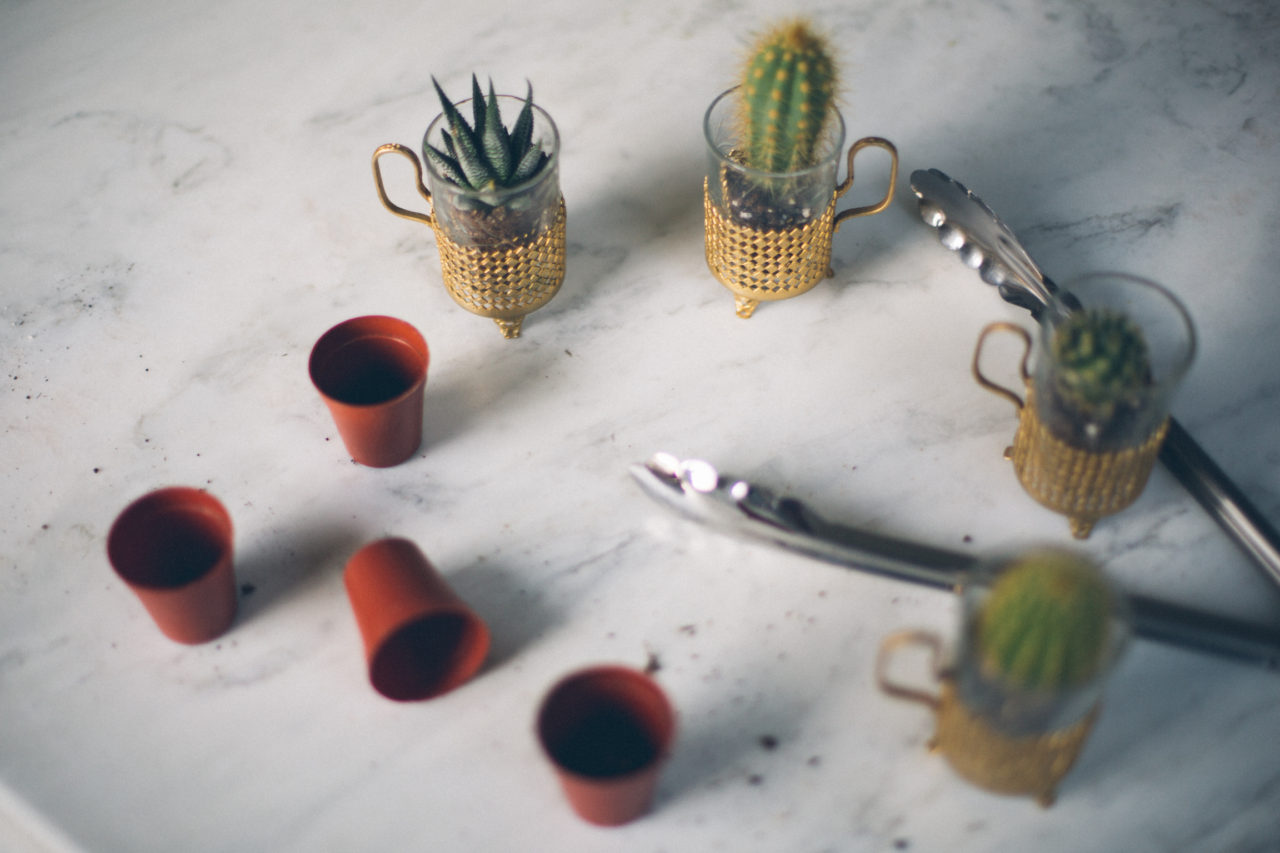 MrKate_Bouquet_of_The_Month_Cacti_Mini-23