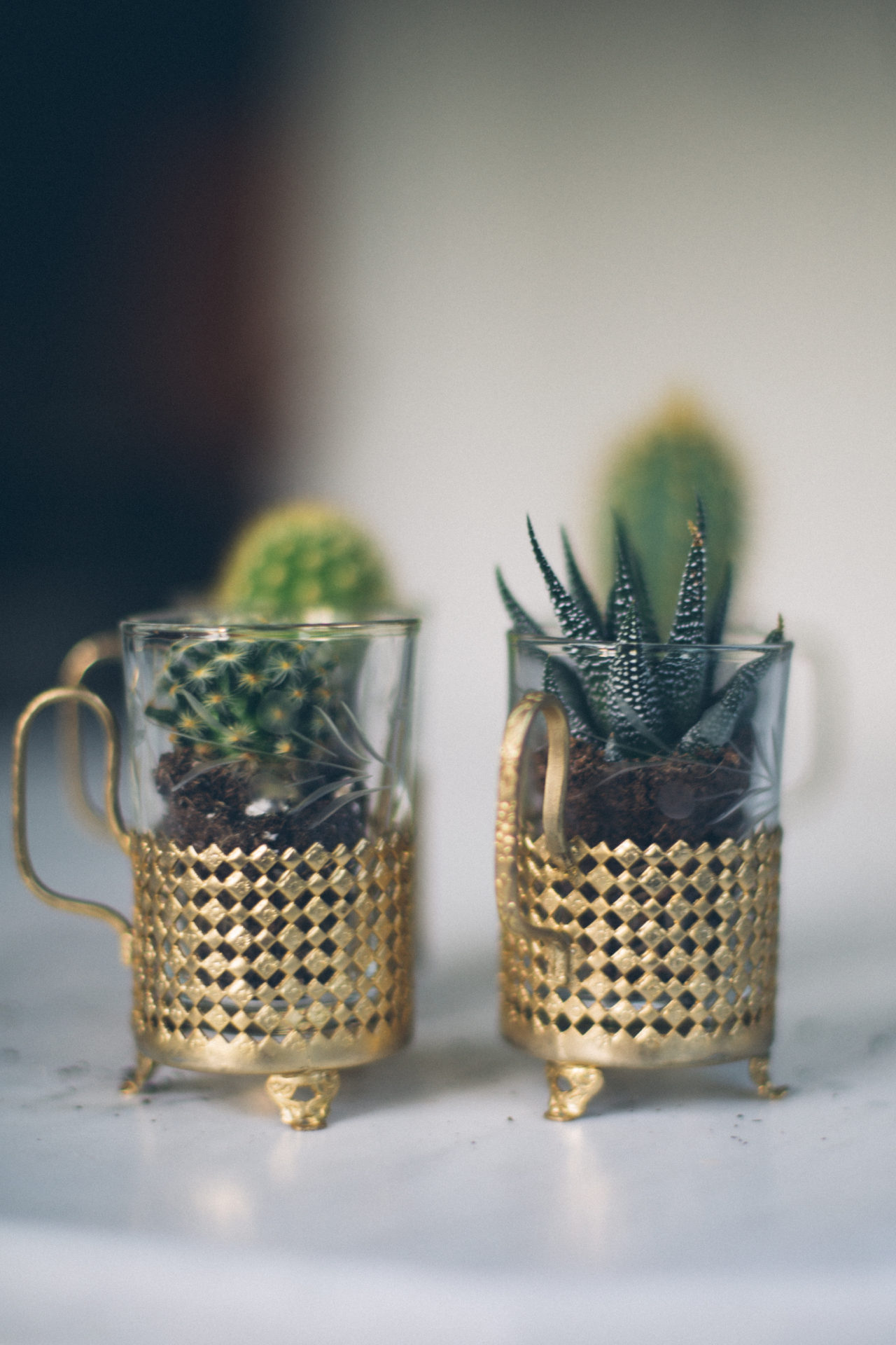 MrKate_Bouquet_of_The_Month_Cacti_Mini-25