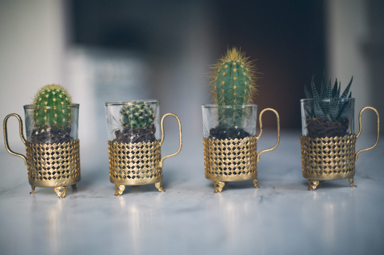 MrKate_Bouquet_of_The_Month_Cacti_Mini-30