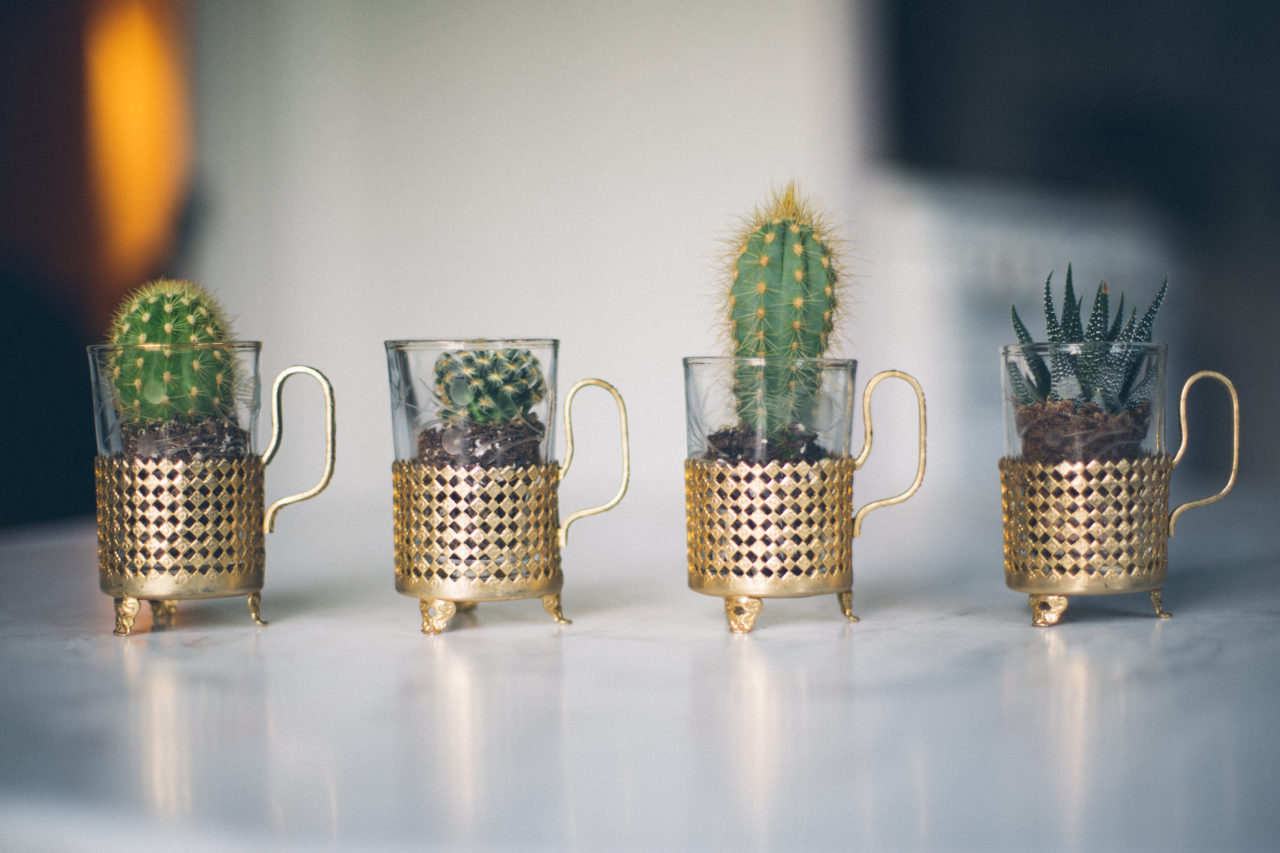 MrKate_Bouquet_of_The_Month_Cacti_Mini-31