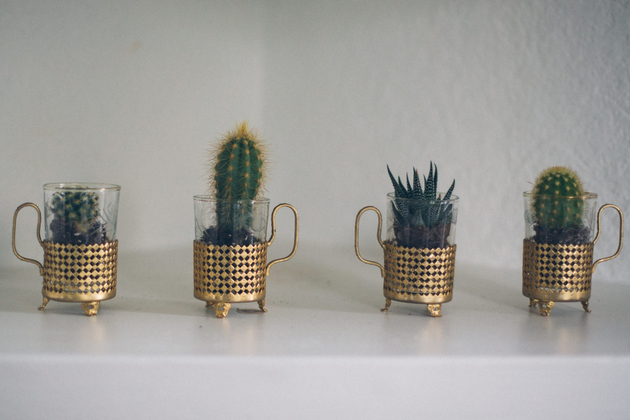 MrKate_Bouquet_of_The_Month_Cacti_Mini-7653